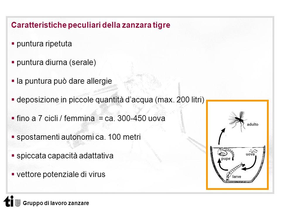 Gruppo di lavoro zanzare Caratteristiche peculiari della zanzara tigre puntura ripetuta puntura diurna (serale) la puntura può dare allergie deposizio