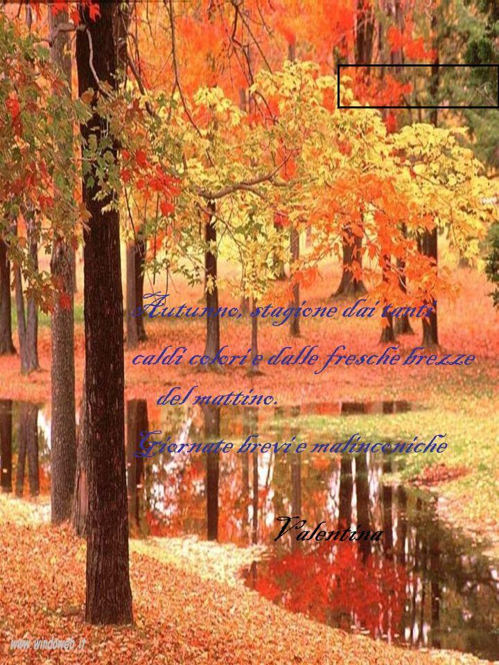 Autunno, stagione dai tanti caldi colori e dalle fresche brezze del mattino.