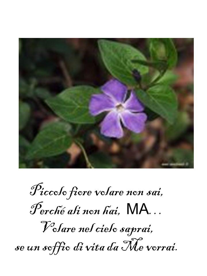 Piccolo fiore volare non sai, Perché ali non hai, MA … Volare nel cielo saprai, se un soffio di vita da Me vorrai.
