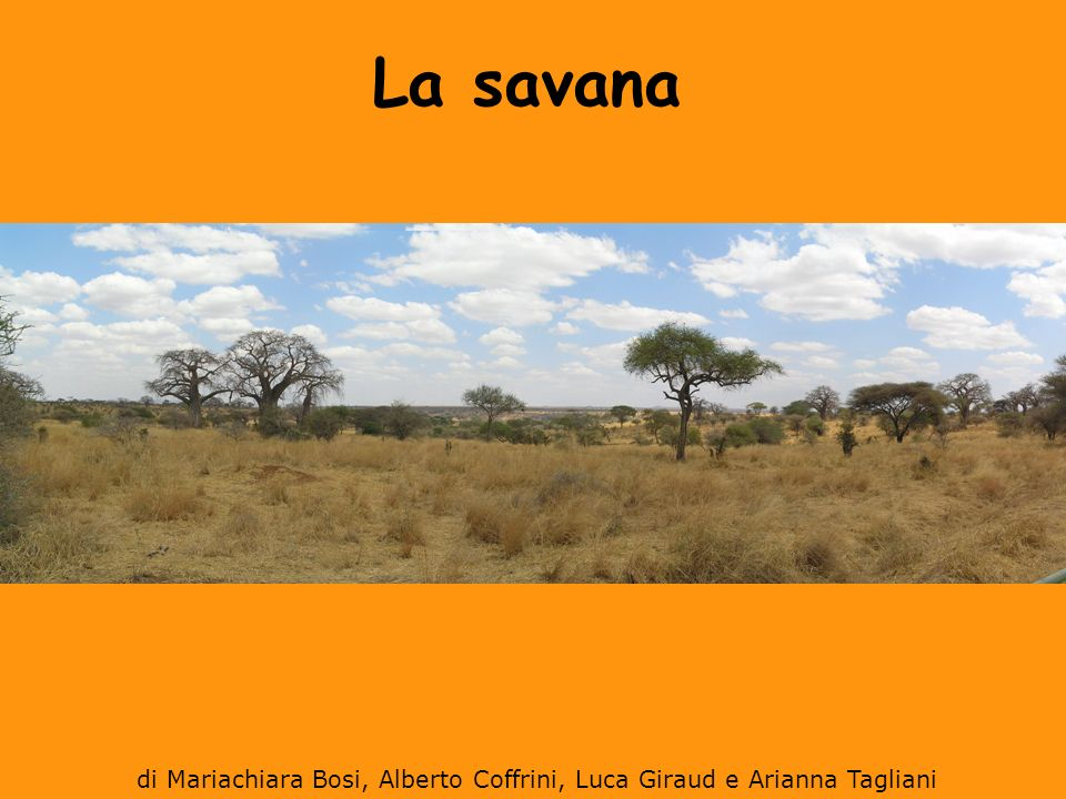 Dove si trova La savana è l ambiente intermedio tra la foresta pluviale (equatore) e deserto (tropici).