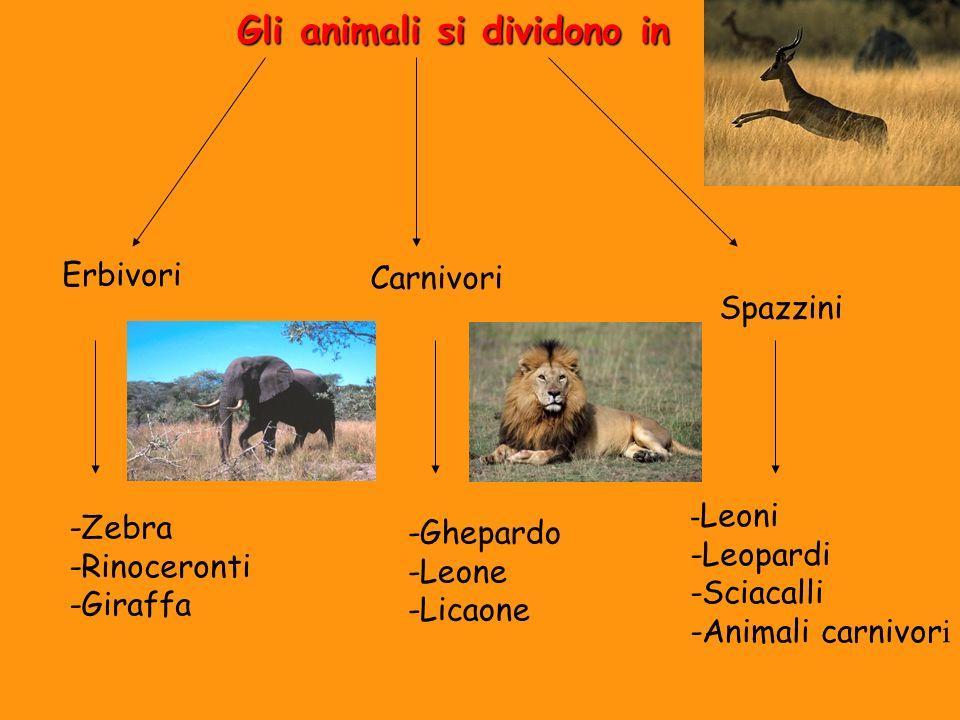 Gli animali si dividono in Carnivori Erbivori Spazzini -Ghepardo -Leone -Licaone -Zebra -Rinoceronti -Giraffa - Leoni -Leopardi -Sciacalli -Animali ca