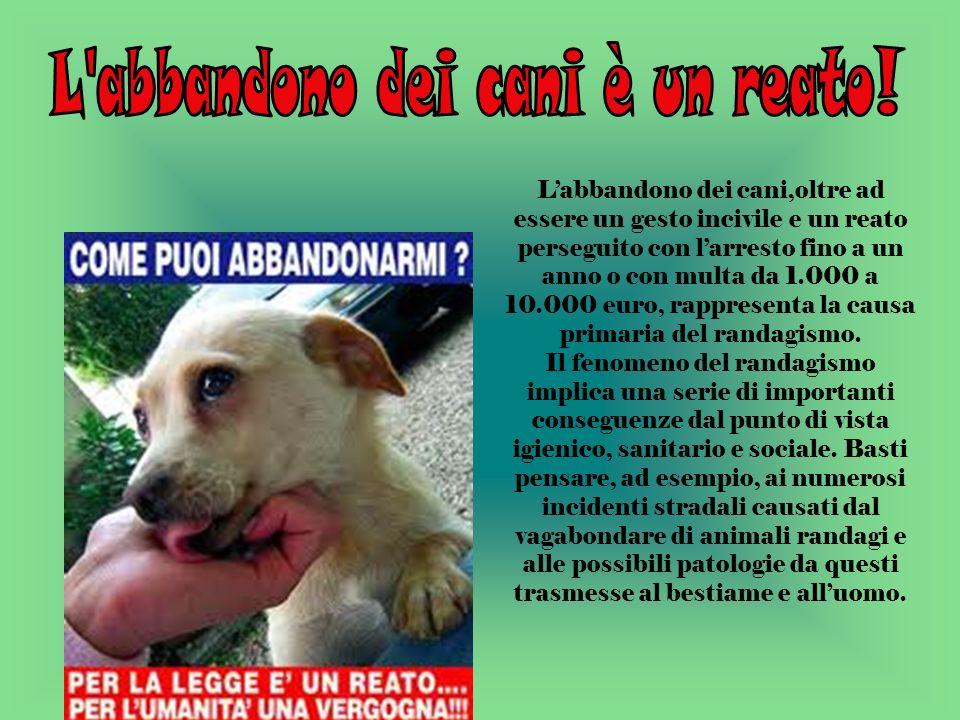 Labbandono dei cani,oltre ad essere un gesto incivile e un reato perseguito con larresto fino a un anno o con multa da 1.000 a 10.000 euro, rappresenta la causa primaria del randagismo.