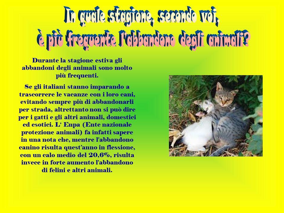 Durante la stagione estiva gli abbandoni degli animali sono molto più frequenti.