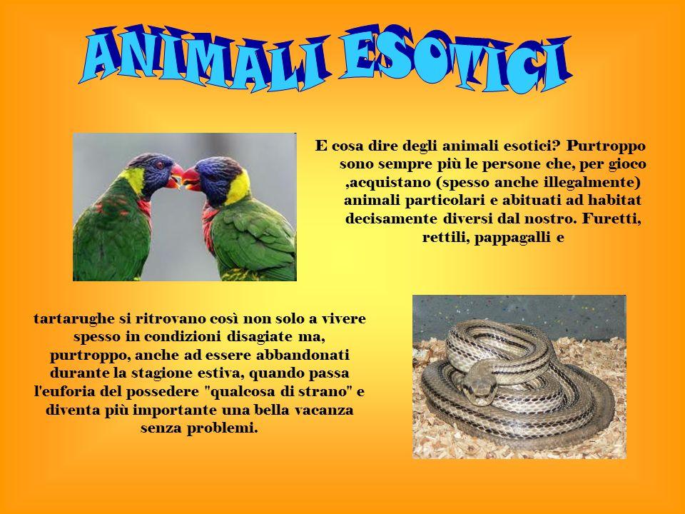 E cosa dire degli animali esotici.