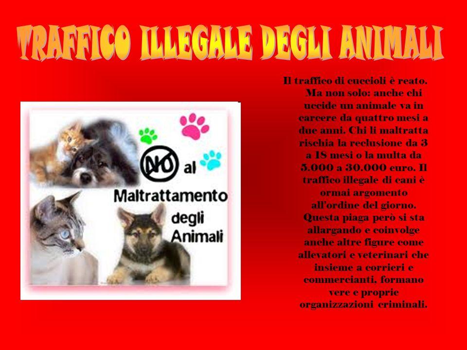 Il traffico di cuccioli è reato.
