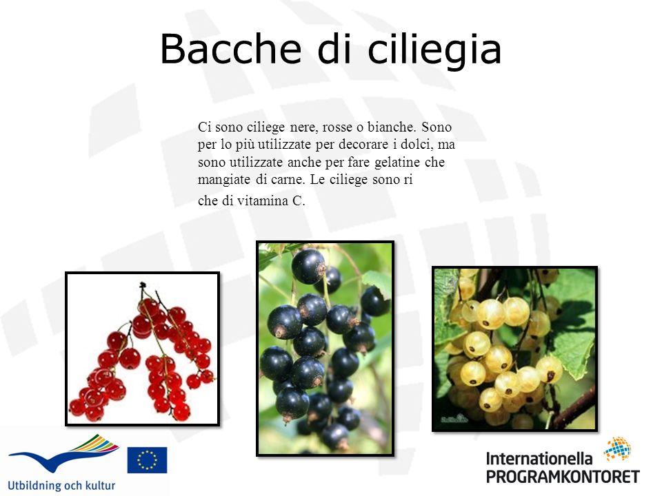 Bacche di ciliegia Ci sono ciliege nere, rosse o bianche. Sono per lo più utilizzate per decorare i dolci, ma sono utilizzate anche per fare gelatine