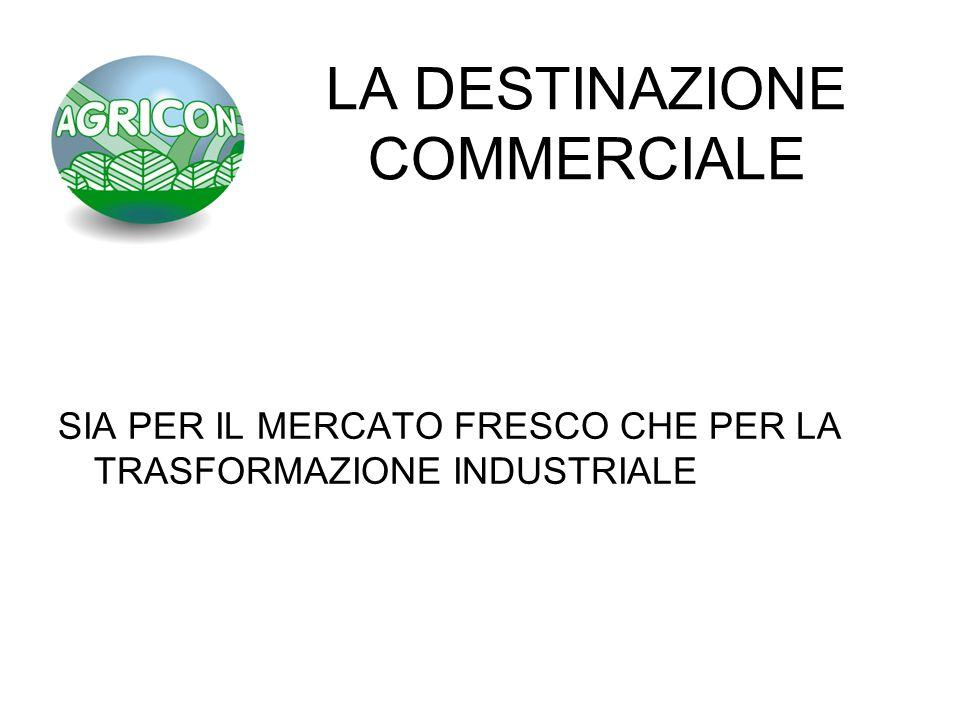 LA DESTINAZIONE COMMERCIALE SIA PER IL MERCATO FRESCO CHE PER LA TRASFORMAZIONE INDUSTRIALE