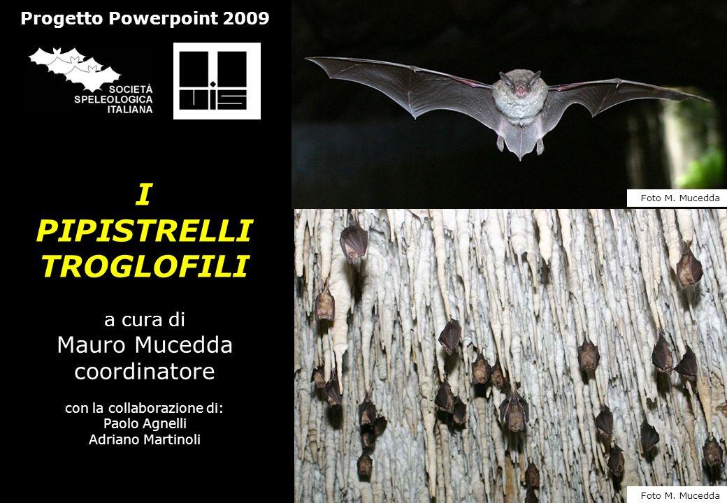 I PIPISTRELLI TROGLOFILI a cura di Mauro Mucedda coordinatore con la collaborazione di: Paolo Agnelli Adriano Martinoli Progetto Powerpoint 2009 Foto