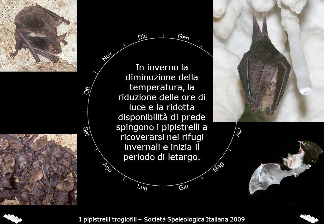 In inverno la diminuzione della temperatura, la riduzione delle ore di luce e la ridotta disponibilità di prede spingono i pipistrelli a ricoverarsi n