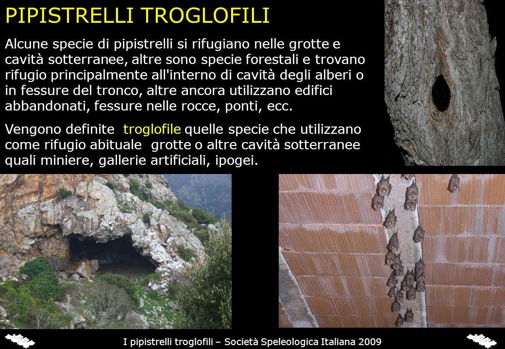 PIPISTRELLI TROGLOFILI Alcune specie di pipistrelli si rifugiano nelle grotte e cavità sotterranee, altre sono specie forestali e trovano rifugio prin