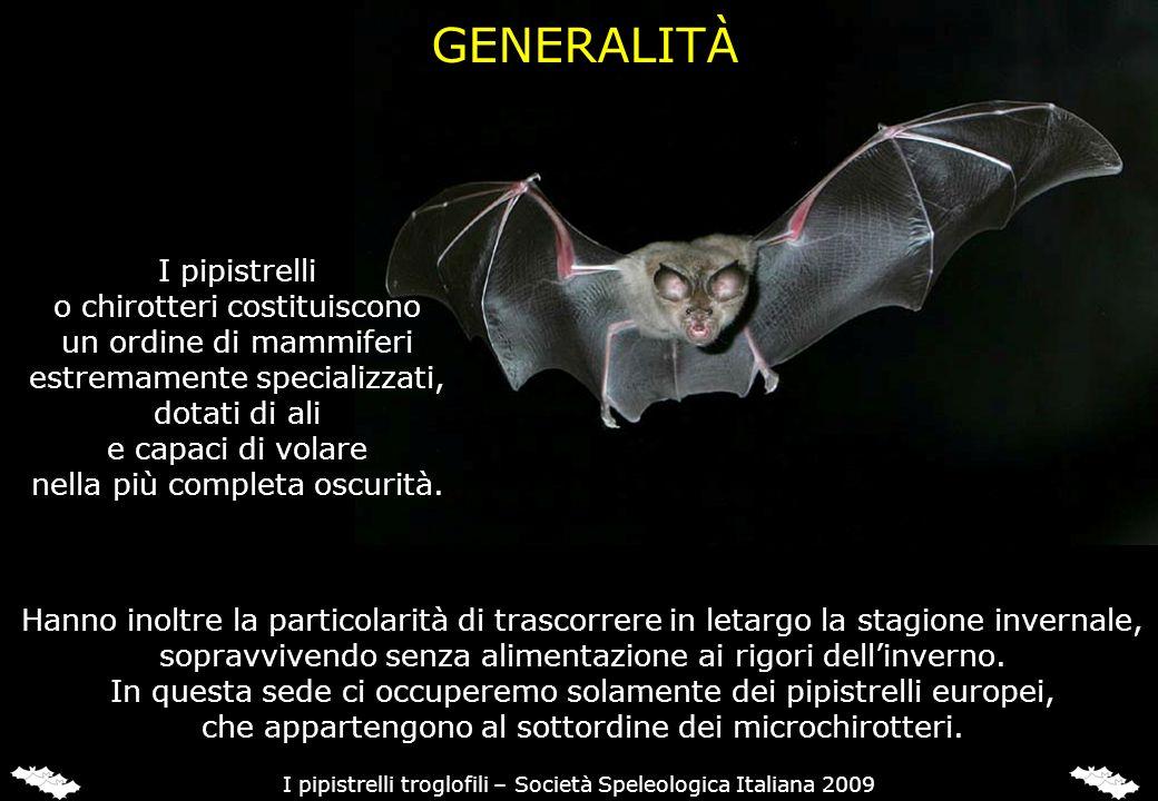 FAMIGLIA RINOLOFIDI In Italia sono presenti 4 Rinolofidi, tutti troglofili: - Rinolofo maggiore (Rhinolophus ferrumequinum) - Rinolofo minore (Rhinolophus hipposideros) - Rinolofo di Mehely (Rhinolophus mehelyi) - Rinolofo euriale (Rhinolophus euryale) I pipistrelli troglofili – Società Speleologica Italiana 2009