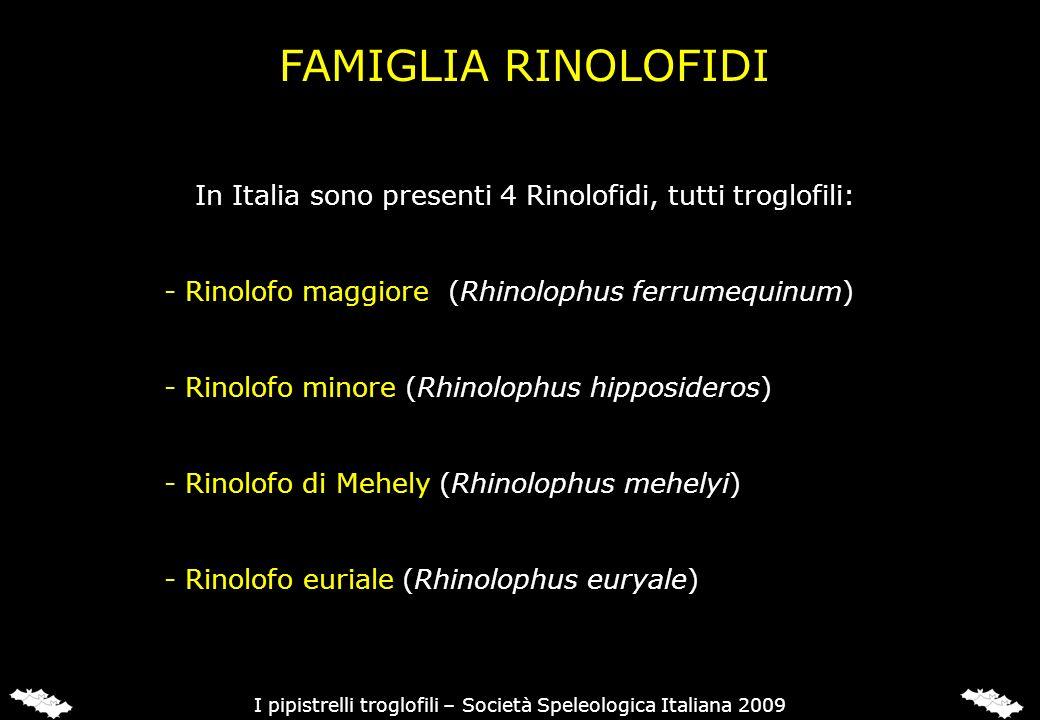 FAMIGLIA RINOLOFIDI In Italia sono presenti 4 Rinolofidi, tutti troglofili: - Rinolofo maggiore (Rhinolophus ferrumequinum) - Rinolofo minore (Rhinolo