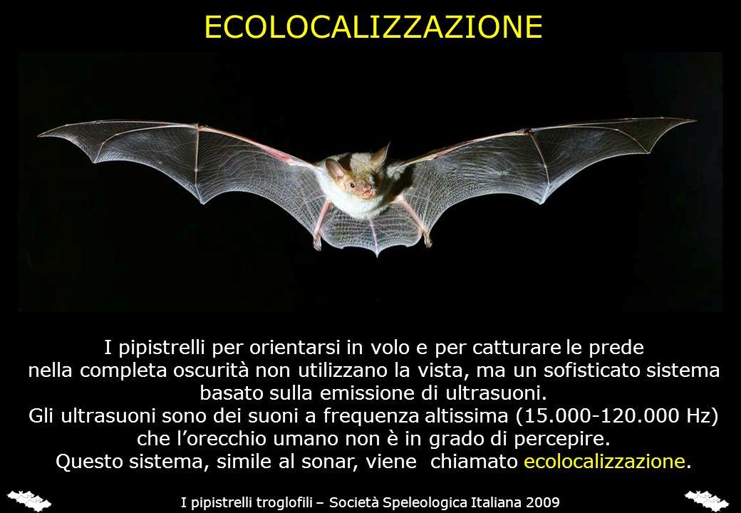 ECOLOCALIZZAZIONE I pipistrelli per orientarsi in volo e per catturare le prede nella completa oscurità non utilizzano la vista, ma un sofisticato sis