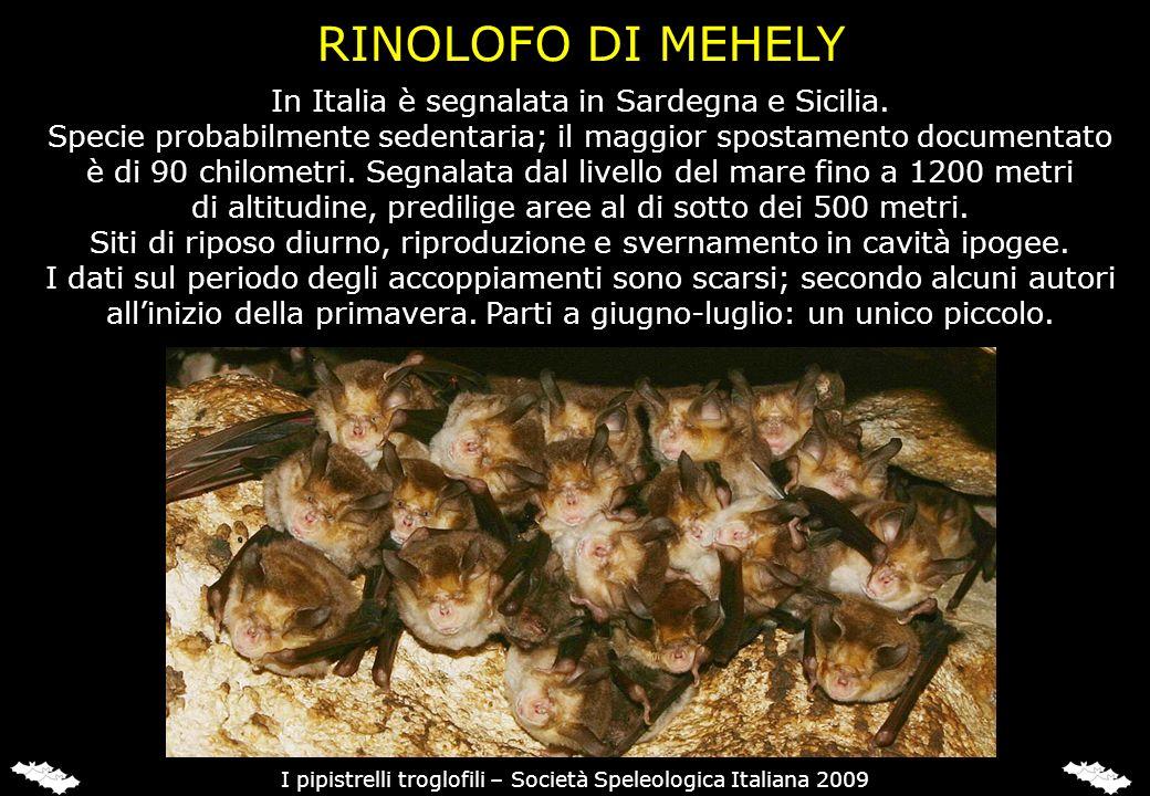 In Italia è segnalata in Sardegna e Sicilia. Specie probabilmente sedentaria; il maggior spostamento documentato è di 90 chilometri. Segnalata dal liv