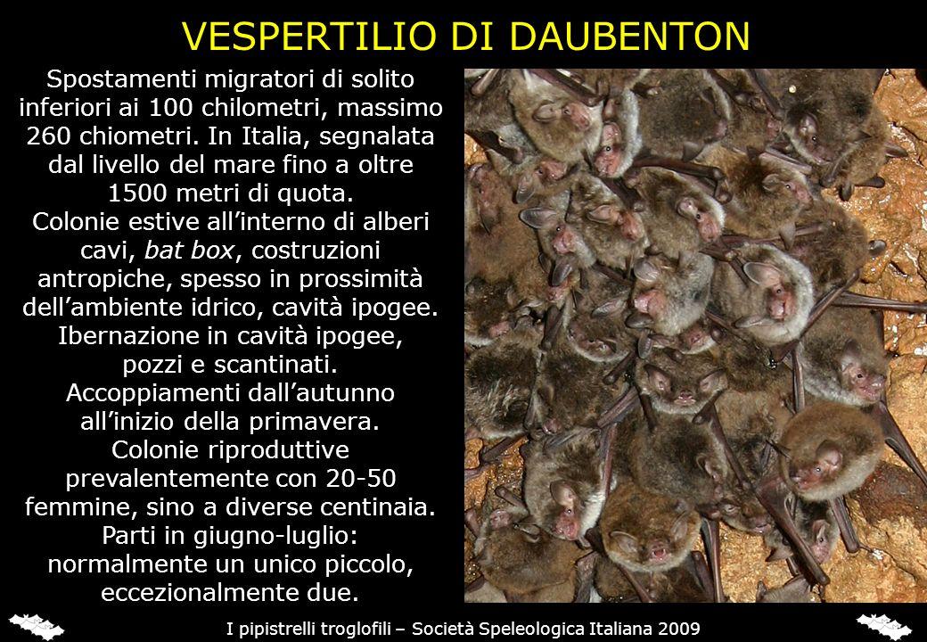 Spostamenti migratori di solito inferiori ai 100 chilometri, massimo 260 chiometri. In Italia, segnalata dal livello del mare fino a oltre 1500 metri