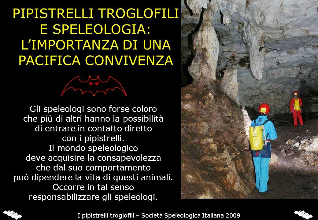 PIPISTRELLI TROGLOFILI E SPELEOLOGIA: LIMPORTANZA DI UNA PACIFICA CONVIVENZA Gli speleologi sono forse coloro che più di altri hanno la possibilità di