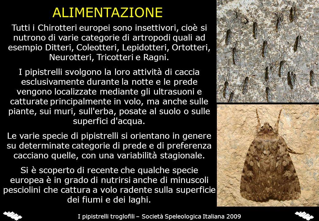 ALIMENTAZIONE I pipistrelli troglofili – Società Speleologica Italiana 2009 Tutti i Chirotteri europei sono insettivori, cioè si nutrono di varie cate