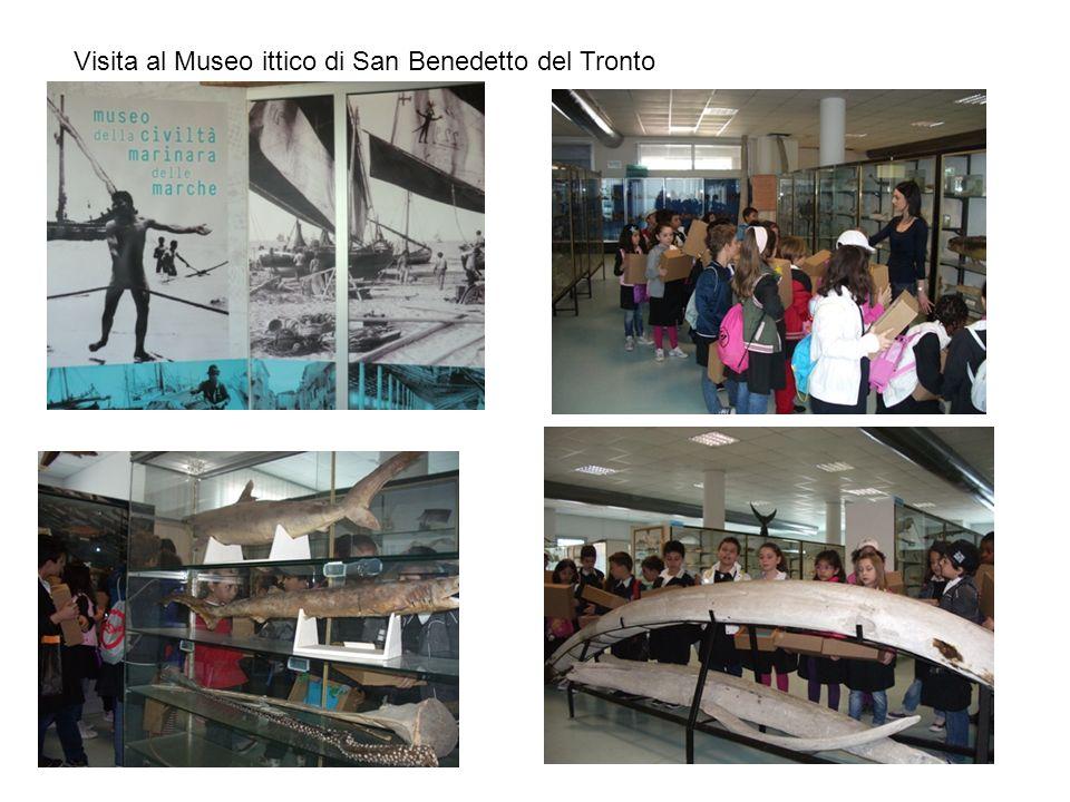 Visita al Museo ittico di San Benedetto del Tronto