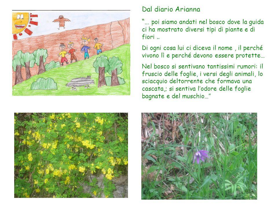 Dal diario Arianna … poi siamo andati nel bosco dove la guida ci ha mostrato diversi tipi di piante e di fiori.. Di ogni cosa lui ci diceva il nome, i