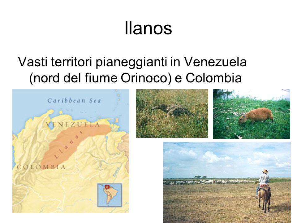 llanos Vasti territori pianeggianti in Venezuela (nord del fiume Orinoco) e Colombia