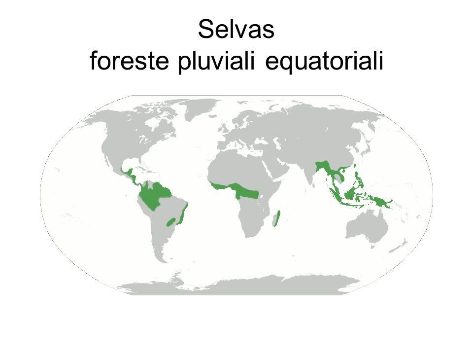 Selvas foreste pluviali equatoriali