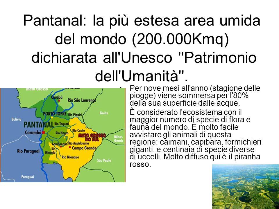 Pantanal: la più estesa area umida del mondo (200.000Kmq) dichiarata all'Unesco ''Patrimonio dell'Umanità''. Per nove mesi all'anno (stagione delle pi