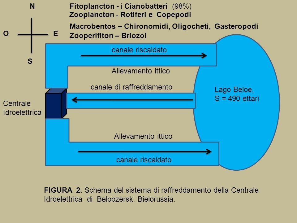 N S OE FIGURA 2. Schema del sistema di raffreddamento della Centrale Idroelettrica di Beloozersk, Bielorussia. Lago Beloe, S = 490 ettari Centrale Idr