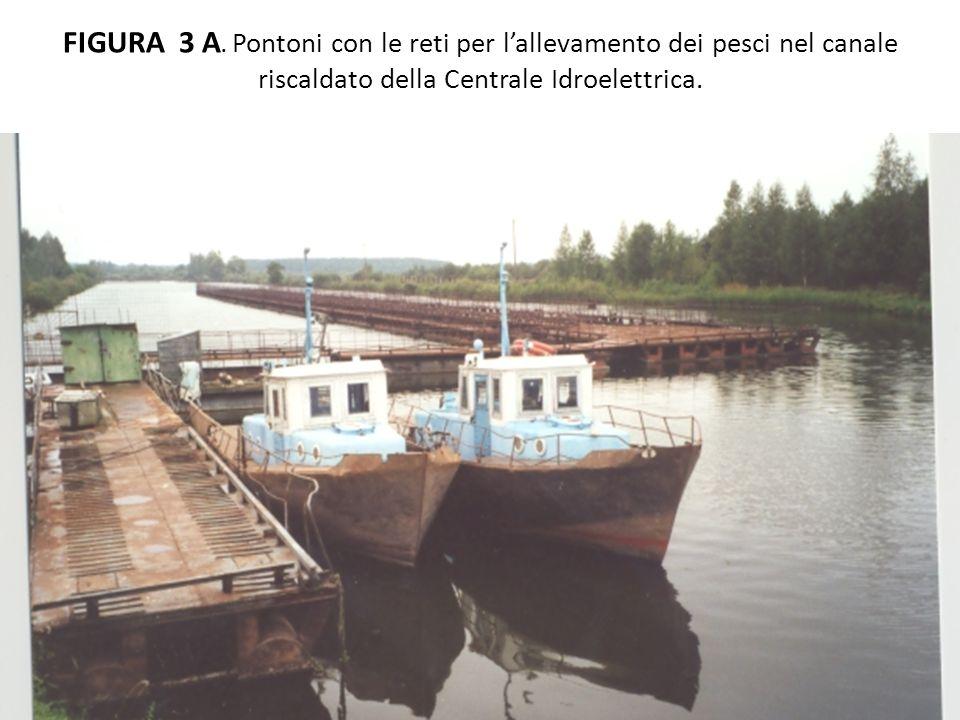 FIGURA 3 A. Pontoni con le reti per lallevamento dei pesci nel canale riscaldato della Centrale Idroelettrica.