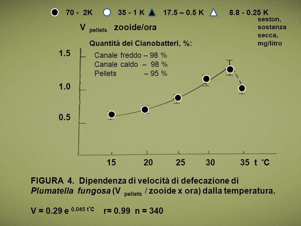 0.5 1.0 1.5 15 20 25 30 35 t ̊ C V pellets zooide/ora FIGURA 4. Dipendenza di velocità di defecazione di Plumatella fungosa (V pellets / zooide x ora)