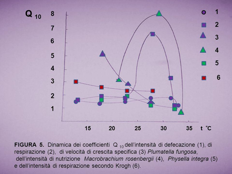 1 2 3 4 5 6 7 8 15 20 25 30 35 t ̊ C Q 10 1 2 3 4 5 6 FIGURA 5. Dinamica dei coefficienti Q 10 dellintensità di defecazione (1), di respirazione (2),