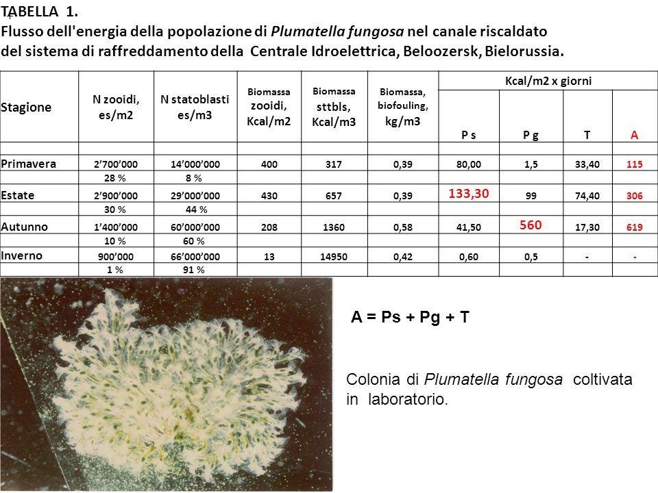 TABELLA 1. Flusso dell'energia della popolazione di Plumatella fungosa nel canale riscaldato del sistema di raffreddamento della Centrale Idroelettric