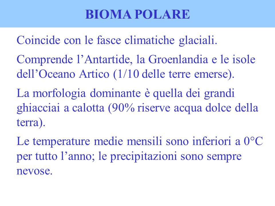 BIOMA POLARE Coincide con le fasce climatiche glaciali. Comprende lAntartide, la Groenlandia e le isole dellOceano Artico (1/10 delle terre emerse). L