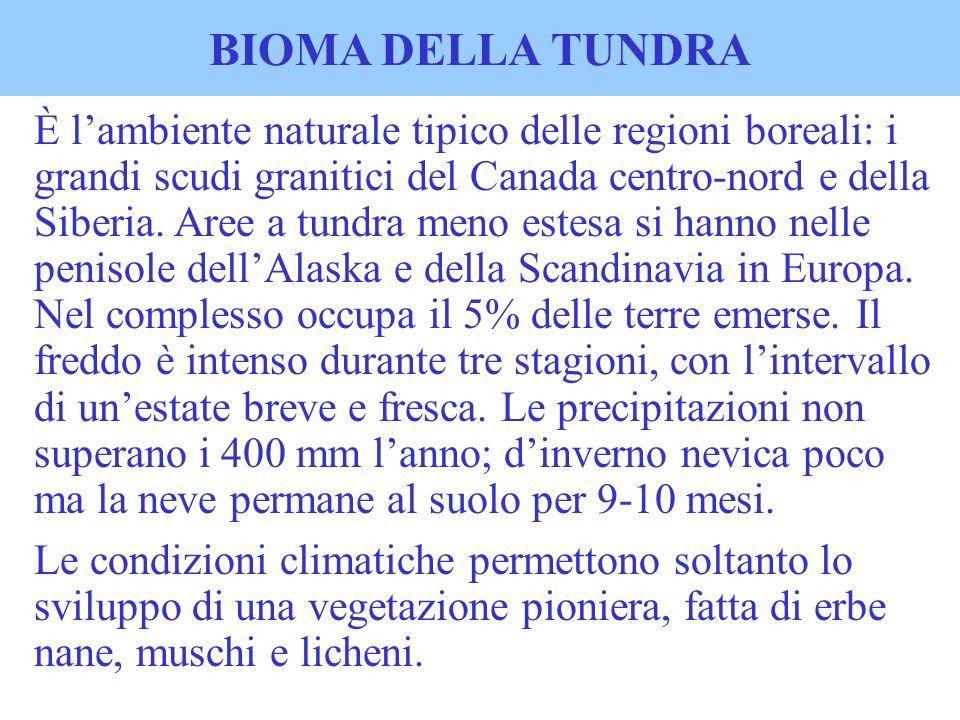 BIOMA DELLA TUNDRA È lambiente naturale tipico delle regioni boreali: i grandi scudi granitici del Canada centro-nord e della Siberia. Aree a tundra m