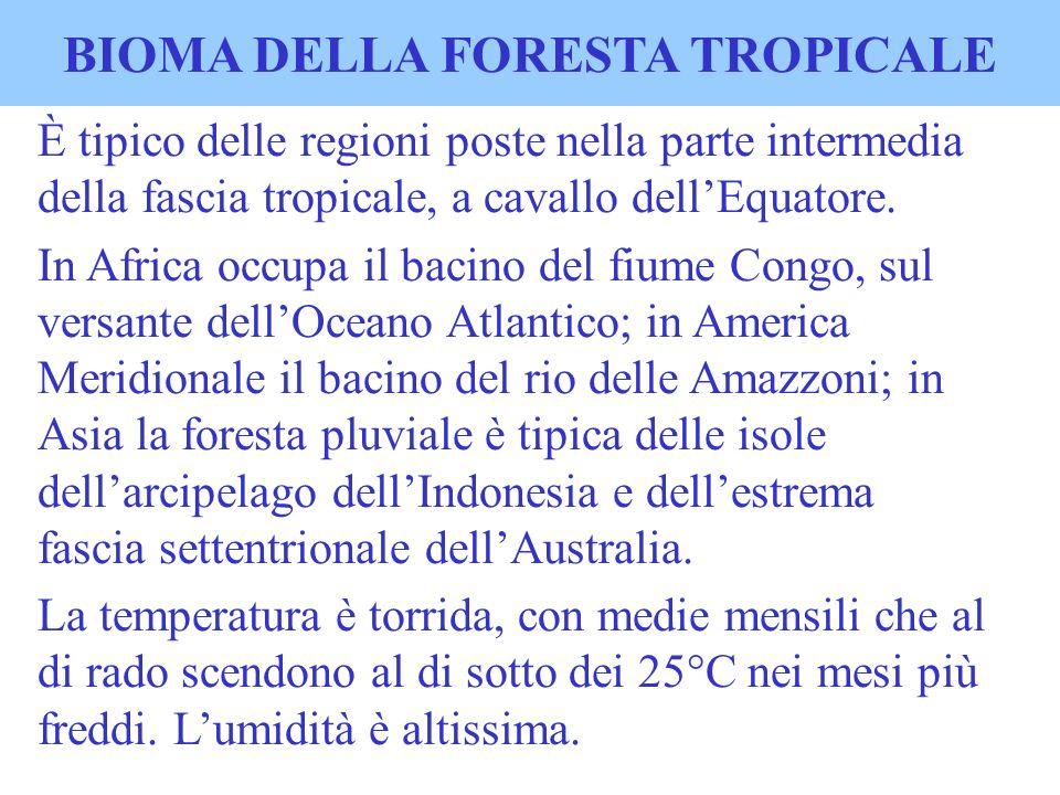 BIOMA DELLA FORESTA TROPICALE È tipico delle regioni poste nella parte intermedia della fascia tropicale, a cavallo dellEquatore. In Africa occupa il