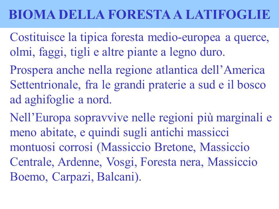 BIOMA DELLA FORESTA A LATIFOGLIE Costituisce la tipica foresta medio-europea a querce, olmi, faggi, tigli e altre piante a legno duro. Prospera anche