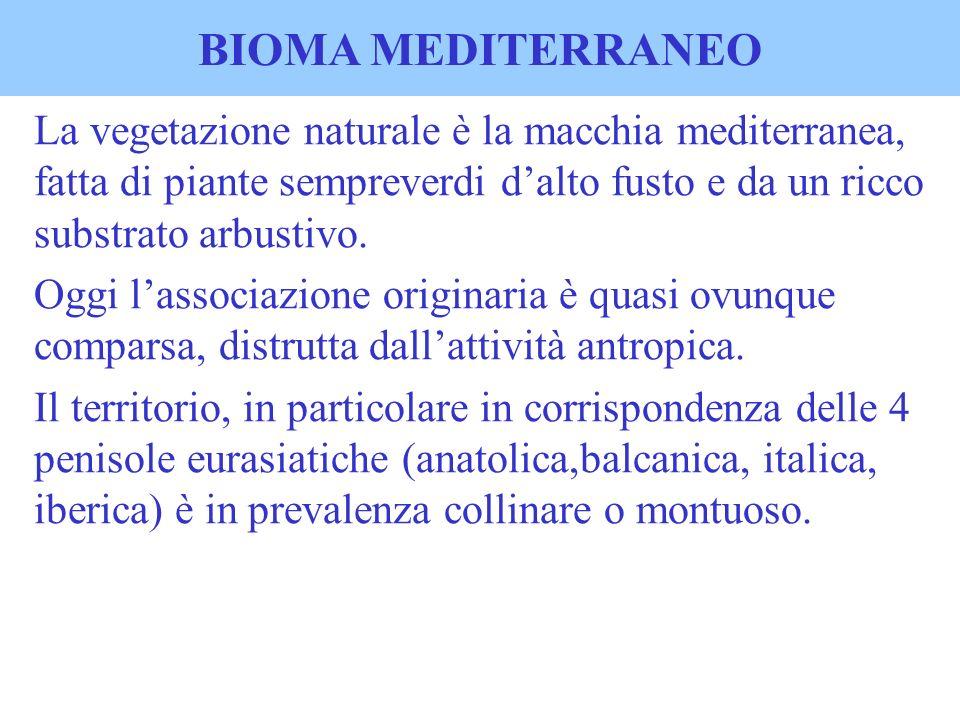 BIOMA MEDITERRANEO La vegetazione naturale è la macchia mediterranea, fatta di piante sempreverdi dalto fusto e da un ricco substrato arbustivo. Oggi