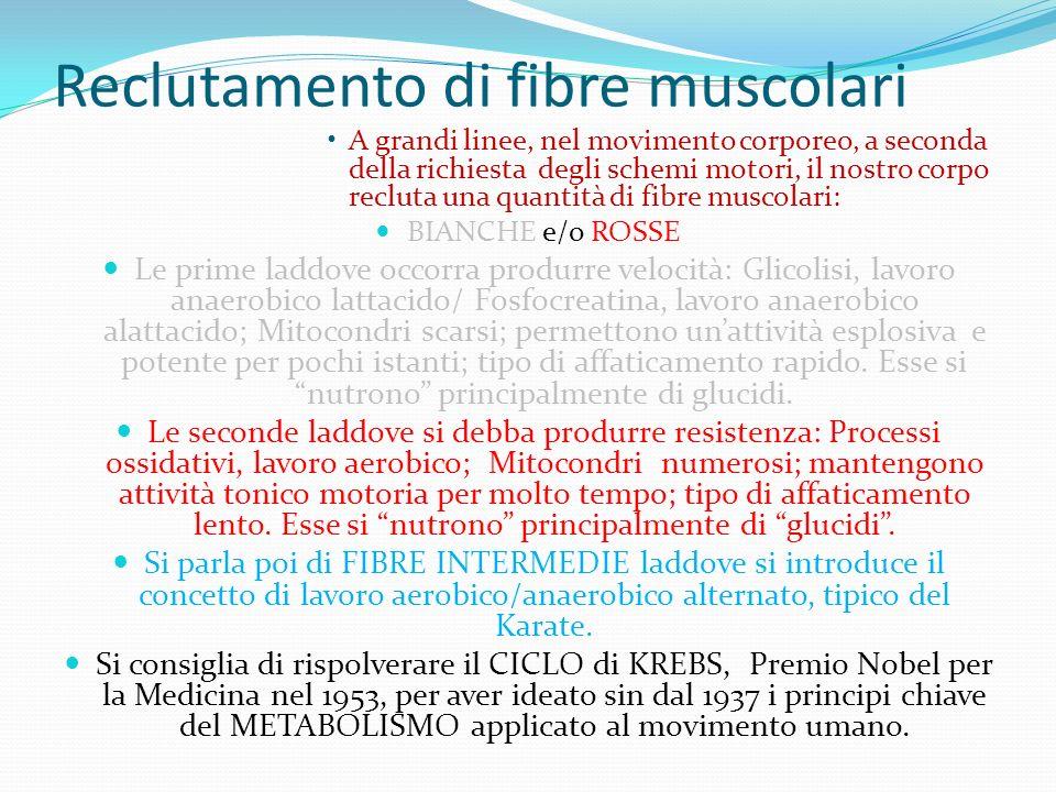 Reclutamento di fibre muscolari A grandi linee, nel movimento corporeo, a seconda della richiesta degli schemi motori, il nostro corpo recluta una quantità di fibre muscolari: BIANCHE e/o ROSSE Le prime laddove occorra produrre velocità: Glicolisi, lavoro anaerobico lattacido/ Fosfocreatina, lavoro anaerobico alattacido; Mitocondri scarsi; permettono unattività esplosiva e potente per pochi istanti; tipo di affaticamento rapido.