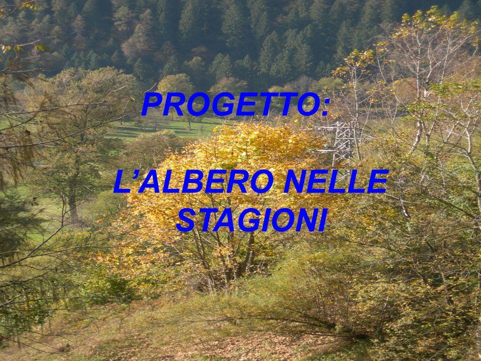 PROGETTO: LALBERO NELLE STAGIONI
