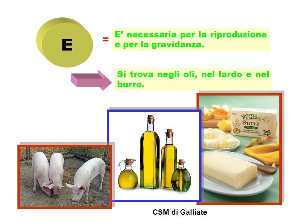 E = E necessaria per la riproduzione e per la gravidanza. Si trova negli oli, nel lardo e nel burro. CSM di Galliate