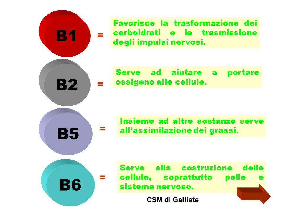 B1 = Favorisce la trasformazione dei carboidrati e la trasmissione degli impulsi nervosi. B2 B5 B6 = Serve ad aiutare a portare ossigeno alle cellule.