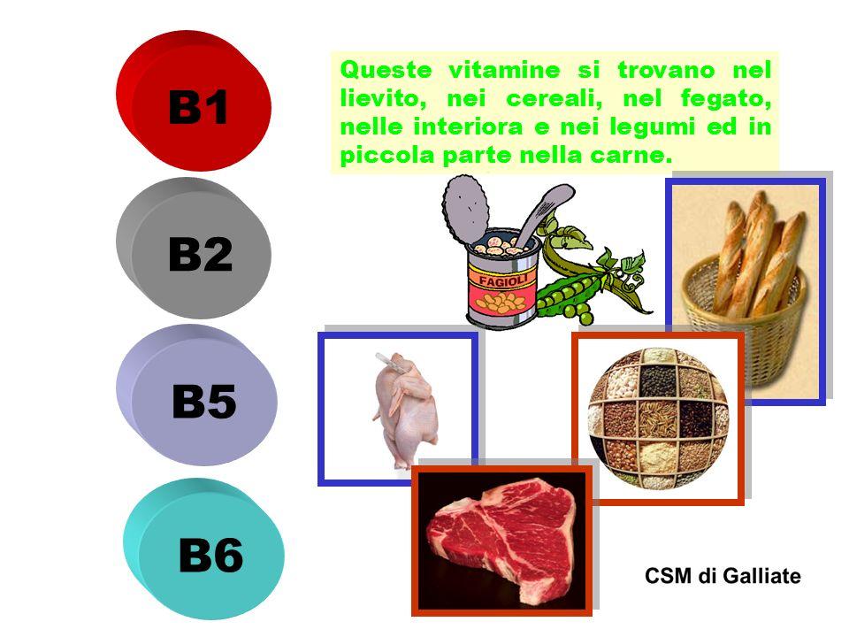 B1 Queste vitamine si trovano nel lievito, nei cereali, nel fegato, nelle interiora e nei legumi ed in piccola parte nella carne. B2 B5 B6