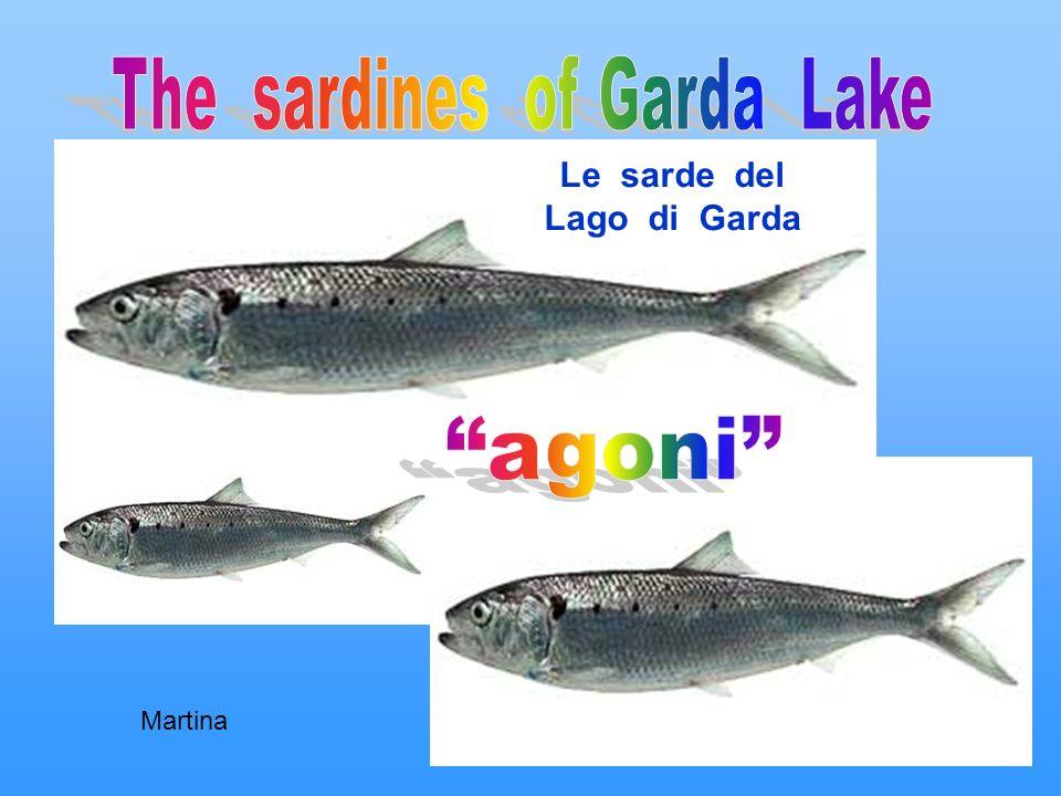 Le sarde del Lago di Garda Martina