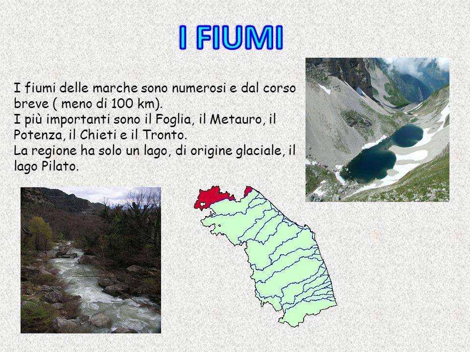 I fiumi delle marche sono numerosi e dal corso breve ( meno di 100 km). I più importanti sono il Foglia, il Metauro, il Potenza, il Chieti e il Tronto