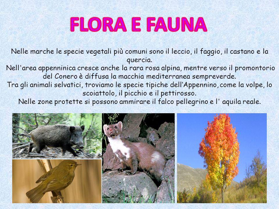 Nelle marche le specie vegetali più comuni sono il leccio, il faggio, il castano e la quercia. Nell'area appenninica cresce anche la rara rosa alpina,