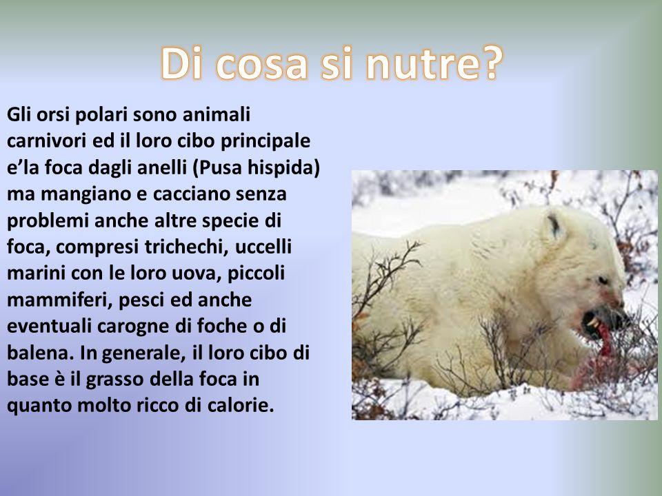 I mammiferi in generale sono coperti di peli,ma la loro caratteristica principale e che le femmine allattano i cuccioli attraverso le ghiandole mammar