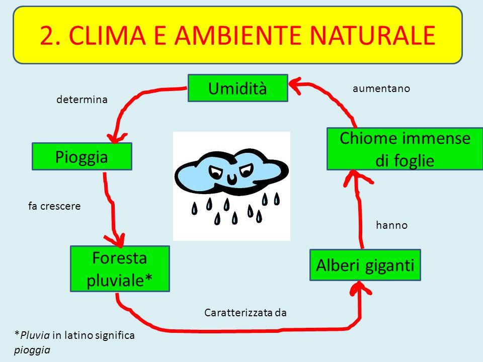 2. CLIMA E AMBIENTE NATURALE Umidità Pioggia Foresta pluviale* Alberi giganti Chiome immense di foglie determina fa crescere Caratterizzata da hanno a