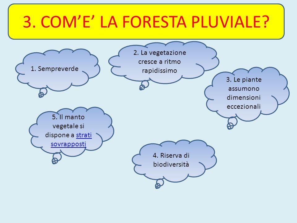 3. COME LA FORESTA PLUVIALE? 4. Riserva di biodiversità 2. La vegetazione cresce a ritmo rapidissimo 3. Le piante assumono dimensioni eccezionali 5. I