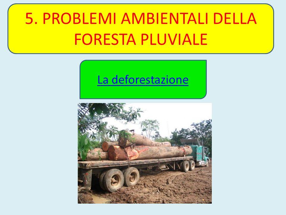 5. PROBLEMI AMBIENTALI DELLA FORESTA PLUVIALE La deforestazione