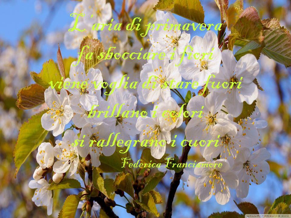 Primavera dolce stagione il tuo soffio apre il mio cuore la tua gioia nel cielo si espande e al tuo abbraccio mi sento più grande Prof. Massimo Lo Giu