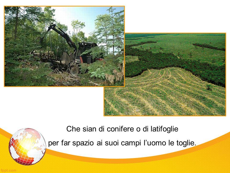 Che sian di conifere o di latifoglie per far spazio ai suoi campi luomo le toglie.
